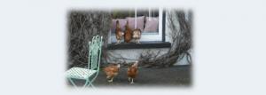 farmers-hens